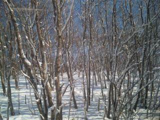 またまた雪☆